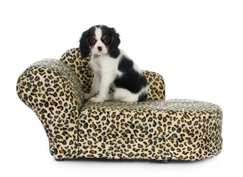Hundesofa in Leopardenoptik